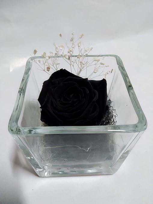 Rosa eterna Negra. Gratis TU ENVÍO. Rosas eterna Negras. Rosa ...