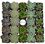 Shop Succulents Assorted Succulent (Collection of 256)