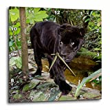 3dRose Belize, City, Zoo. Black Panther, Captive. – Wall Clock, 15 by 15-Inch (dpp_208371_3)