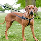 """Freedom No Pull Dog Harness, Harness ONLY (Teal, Medium (1"""" wide)"""