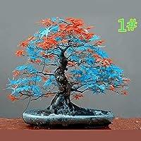 Junlinto,20Pcs Japanese Maple Seed Bonsai DIY Plant Flower Pot Colorful Leaves Creative Household Home Mini Gardening Decor