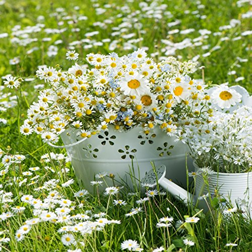 Yeele Daisy Backdrops 4x4ft/1.2 X 1.2M Outdoor Lawn Flower Basket Watering Can Pictures Adult Artistic Portrait Photoshoot Props Photography Background ()