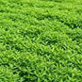 Garden Cover Crop Mix Seeds - Blend of Gardening Cover Crop Seeds: Hairy Vetch, Winter Peas, Forage Collards, Winter Rye, Crimson Clover, More