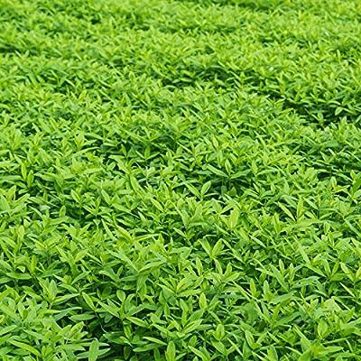 Garden Cover Crop Mix Seeds - Blend of Gardening Cover Crop Seeds: Hairy Vetch, Winter Peas, Forage Collards, Winter Rye, Crimson Clover, More