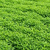 Garden Cover Crop Mix Seeds - 50 Lbs Bulk - Blend of Gardening Cover Crop Seeds: Hairy Vetch, Winter Peas, Forage Collards, Winter Rye, More