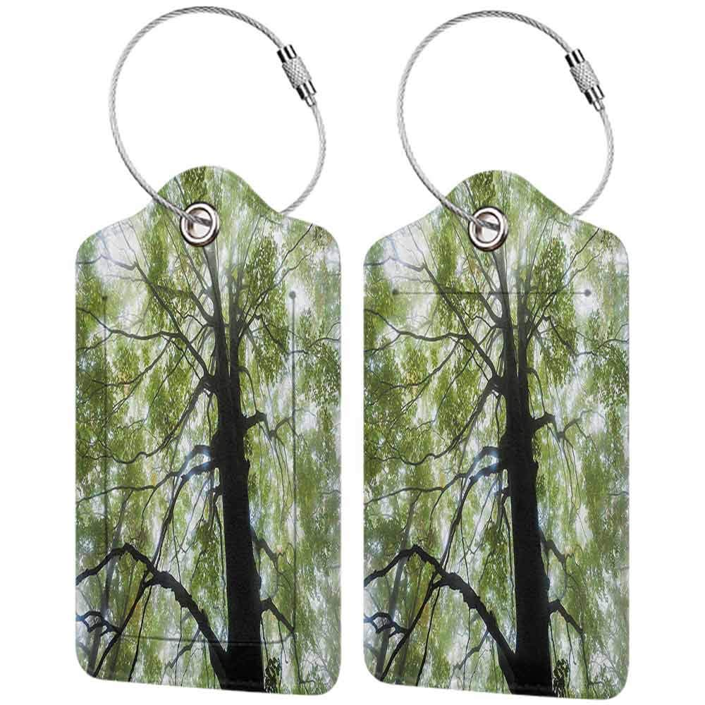 Flexible luggage tag Nature Moody Photo of Old Forest Tree in a Foggy Misty Weather Botanical Eco Picture Fashion match Green Brown White W2.7 x L4.6