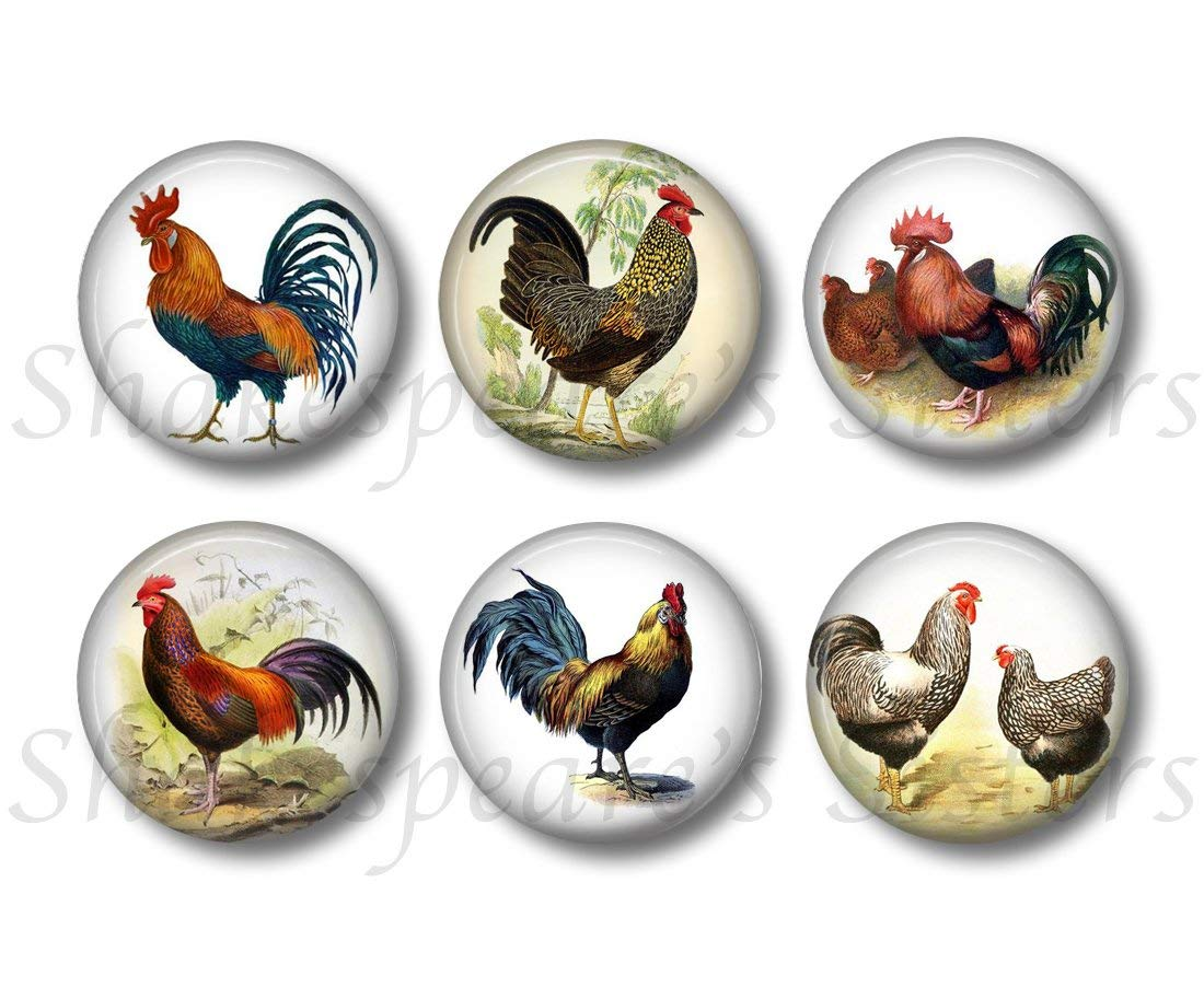 Rooster and Chicken Magnets - 6 Piece Set - 1.5 Inch Round - Farm Kitchen Decor, Cute for Office or Locker, Gift for Farmer