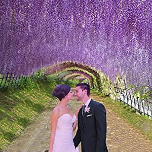 Marcherry Artificial Flowers 12 Pack 3.6 Feet Rattan Strip Artificial Fake Wisteria Vine for Home Kids Room Garden Hotel Office Wedding Decor Wall Crafts Art Party Decoration (Purple) 5