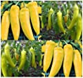 100 HUNGARIAN WAX HOT Pepper seeds YELLOW TO RED dwarf and bushy and approx. 15""