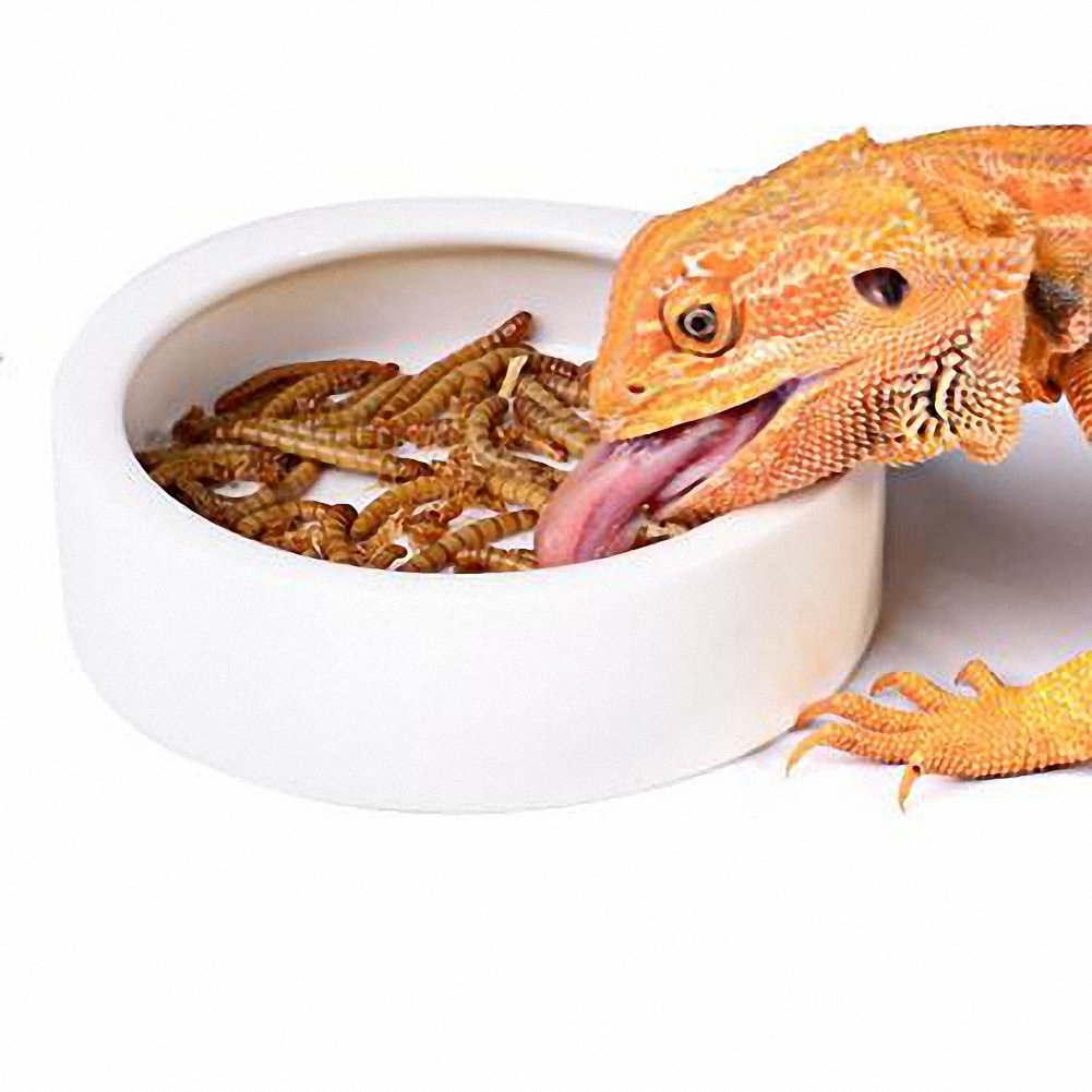 OMEM Worm Dish Mini Reptile Food Bowl Ceramics Made (M)
