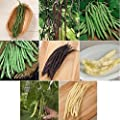 David's Garden Seeds Bean Pole Seed Collection NEP321 (Multi) 8 Varieties 600 Seeds (Open Pollinated, Heirloom, Organic)