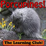 Porcupines! Learn About Porcupines And Learn To Read - The Learning Club! (45+ Photos of Porcupines)