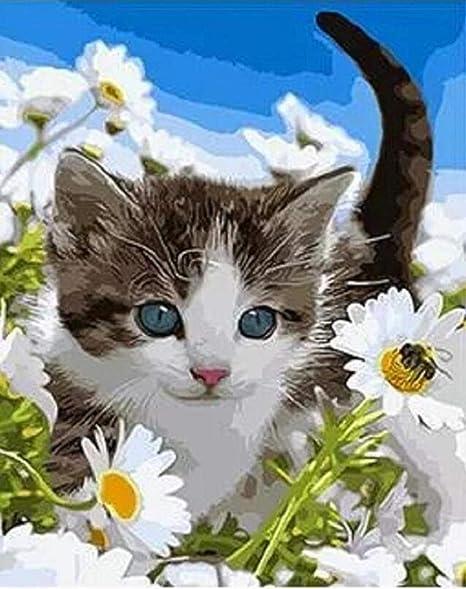 Diy Pintura Al Óleo Pintura Por Número Kit - Zou Ju Blanco Y Gato ...