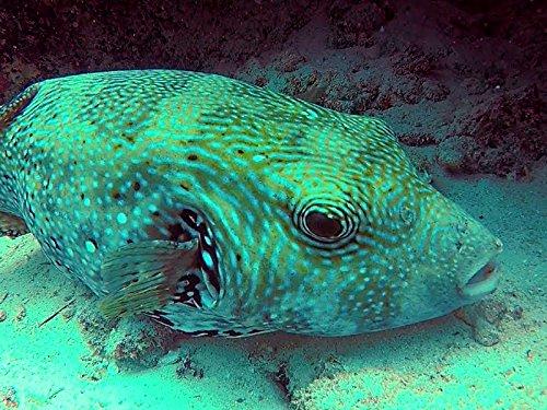 The Best Diving in Zanzibar (Mnemba Island) (Best Diving In Zanzibar)