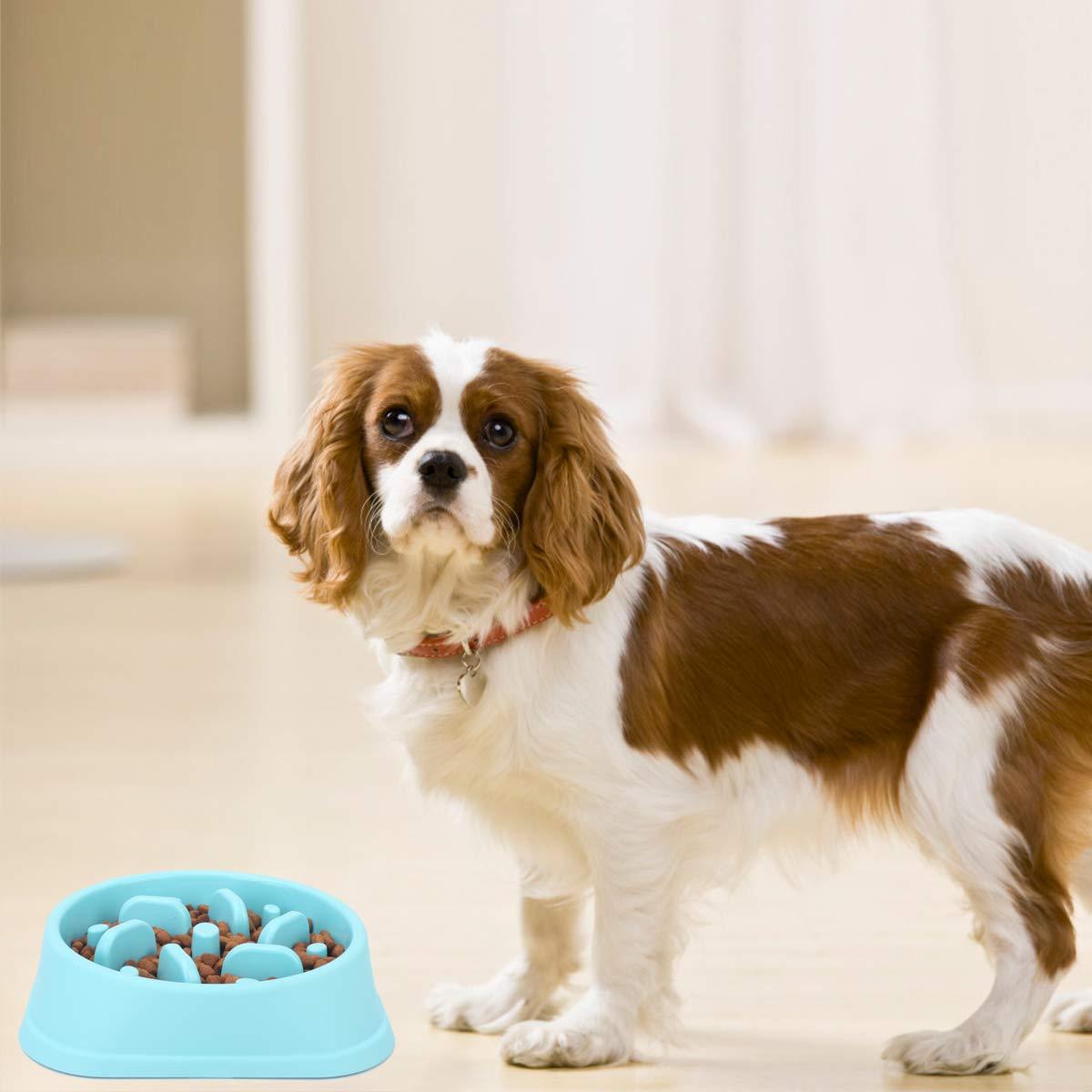 Noyal Dog Slow Feeder Bowl Non Slip Puzzle Bowl Anti Gulping Pet