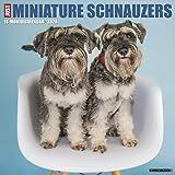 Just Miniature Schnauzers 2020 Calendar
