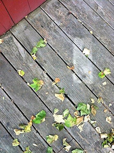 Laminated Wood Santa - Home Comforts LAMINATED POSTER Wood Leaves Deck Santa Cruz Season Fall Poster 24x16 Adhesive Decal