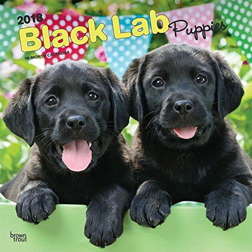 Labrador Retriever Puppies, Black 2018 Monthly Square Wall Calendar