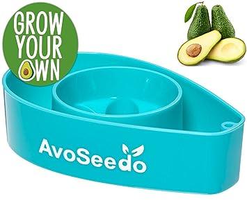 AvoSeedo Das Besondere Garten Geschenke   Pflanzen Sie Ihren Eigenen  Avocadobaum. Kleine Geschenke Für Männer