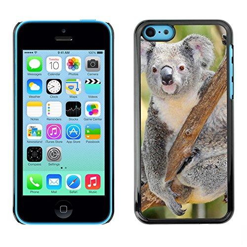 Premio Sottile Slim Cassa Custodia Case Cover Shell // V00002818 koala australien // Apple iPhone 5C