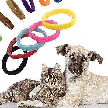 AchidistviQ - 12 Unidades para identificación de Perros, Gatos, Cachorros y Mascotas, Nailon, Random Color, Large: Amazon.es: Hogar