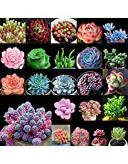 Portal Cool R: 100 Seeds/Bag Succulents Seeds Various Planting Seeds Garden Indoor Potted Plant