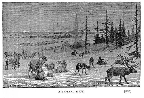 LAMINATED POSTER Lapland And Reindeer Illustrations Poster Print 24x (Lapland Reindeer)