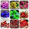 (Strawberry 900 *Ambizu*) 9 Packs Rare Hybrid Edible Purple Yellow Pink Blue Green Red Giant Strawberry Seeds, Professional Pack, 100 Seeds / Pack