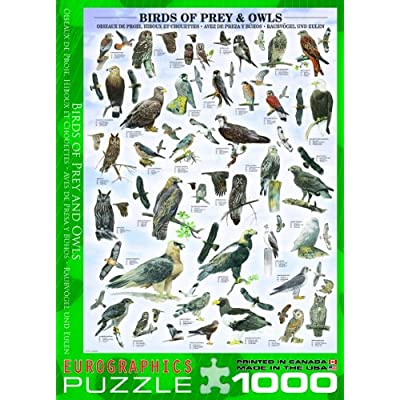 EuroGraphics Birds of Prey and Owls Puzzle (1000-Piece): Toys & Games
