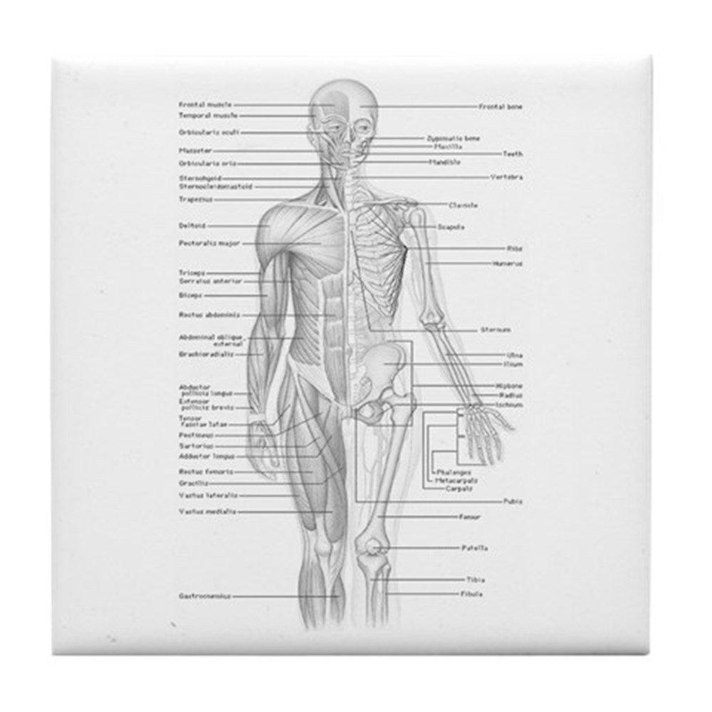 Schön Anatomie Motiv Ideen - Anatomie Und Physiologie Knochen Bilder ...