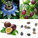 Homeofying 40Pcs Tropical Exotic Vine Passion Purple Passiflora Edulis Fruit Plant Seeds