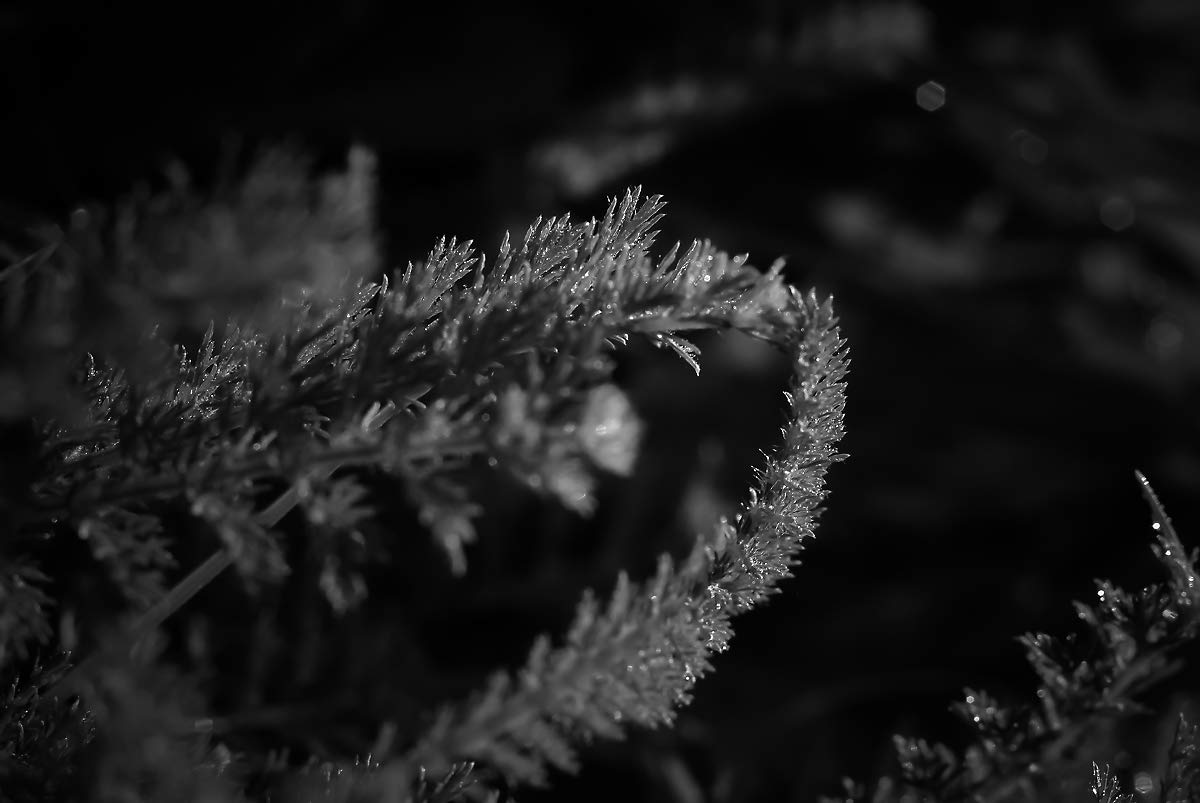 Fern photograph forest fern photography fine art black and white nature photo print nature photography gifts office lobby wall decor available in 4x6 to