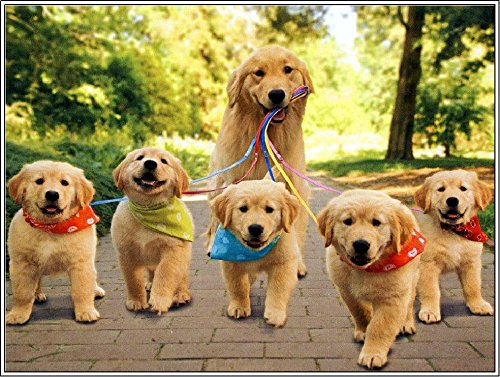 Package of Four (4) Golden Retriever Dog Dogs Puppy Puppies Greetings Greeting Stationery Notecard Notecards with Envelopes ()