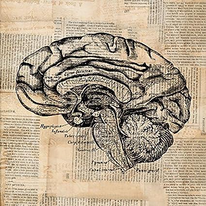 Amazon Vintage Brain Cross Section Antique Print Medical