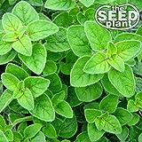 Oregano Seeds - 500 SEEDS NON-GMO