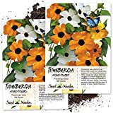 Seed Needs, Black Eyed Susan Vine Mix (Thunbergia alata) Twin Pack of 100 Seeds Each