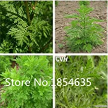 New Home Garden Plant 200 Seeds Artemisia Annua Seeds - One-year Mugwort Free Shipping Flowers