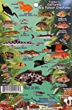 "Search : California Kelp Forest Creatures Guide Franko Maps Laminated Fish Card 4"" x 6"""