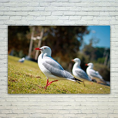 Sea Gull Trio (Westlake Art Seagulls Bird - 12x18 Poster Print Wall Art - Modern Picture Photography Home Decor Office Birthday Gift - Unframed 12x18 Inch (18C3-73698))