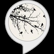 Bird Chorus