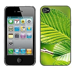 X-ray Impreso colorido protector duro espalda Funda piel de Shell para Apple iPhone 4 / iPhone 4S / 4S - Green Leaf Nature Sun