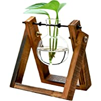 KYMAKE Clear Glass Hydroponics Terrarium with Wooden Stand Best for Decorating Your Life.