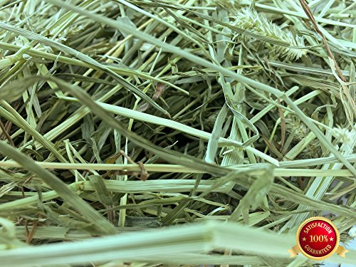 Rabbit Hole Hay Orchard Grass (1 lbs.), used for sale  Delivered anywhere in USA