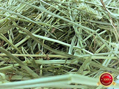 Rabbit Hole Hay Orchard Grass (40 lbs.)