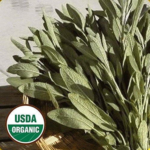 Everwilde Farms - 100 organic Broadleaf Sage Herb Seeds - Gold Vault (Broadleaf Sage)