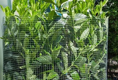 14d7d2953457b Grillage pour plantes et animaux Grillages pour enceintes et clôtures Idéal  pour le jardin volières poulaillers