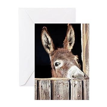 Amazon Cafepress Shy Donkey Greeting Card Note Card