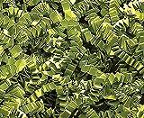 Custom & Unique {10 Pound} of Crinkle Cut Shredded Gift Basket Filler Paper w/ Current Modern Simple Fun Festive Matcha Inspired Green Tea Decorative Cool Trendy Creative Design (Green)