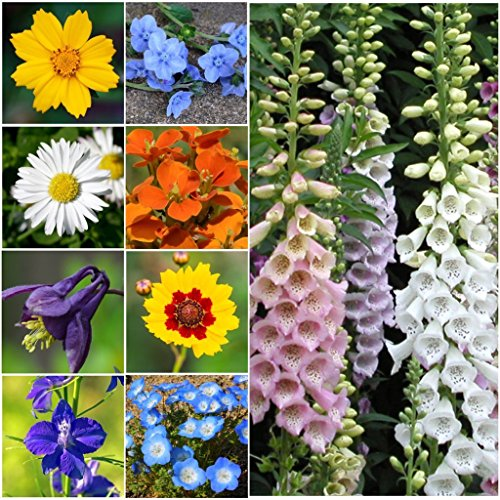 Partial Shade Wildflowers - 1 Oz. with 28 Varieties of Annual and Perennial Flowering Plants. Non GMO - Neonicotinoid-Free. 30,000 Seeds