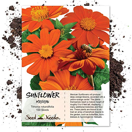 Seeds Sowing Sunflower (Package of 100 Seeds, Mexican Sunflower (Tithonia rotundifolia) Non-GMO Seeds By Seed Needs)